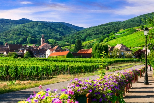 Broaden Your Worldview in Alsace